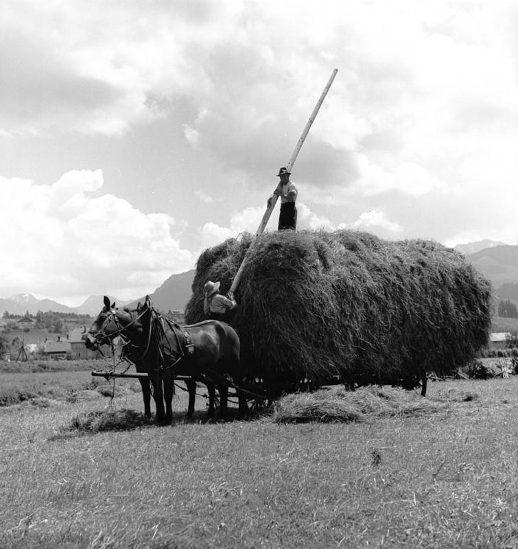 Heuernte unter Männern, 1939