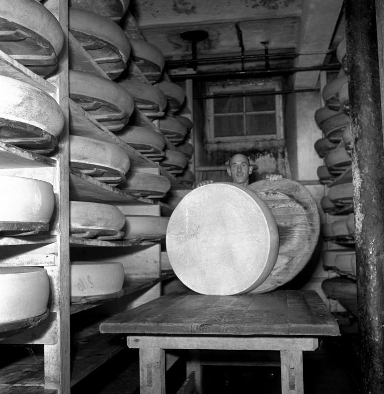 Im Käsekeller, 1952