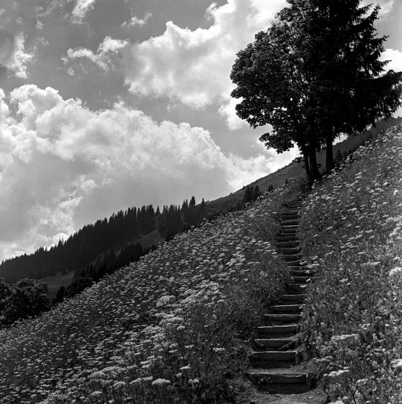 Himmelstreppe, 1950