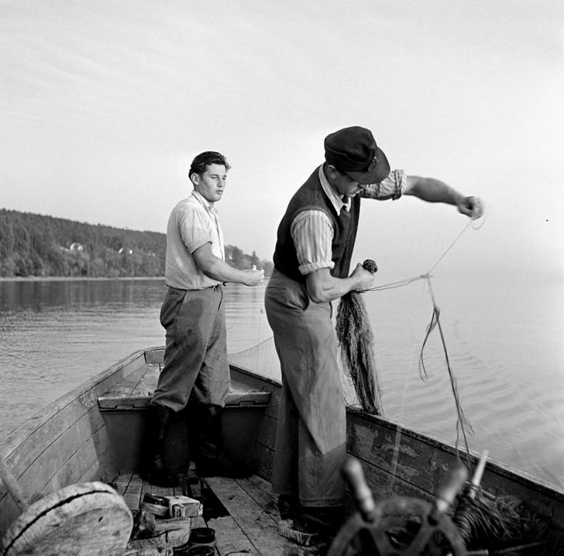 Fischer am Bodensee, 1950