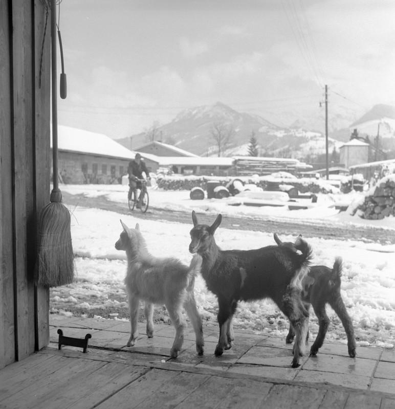 Frühlingsgefühle, 1958