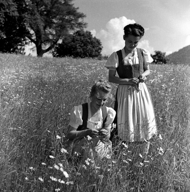 Allgäuer Föhla, 1956