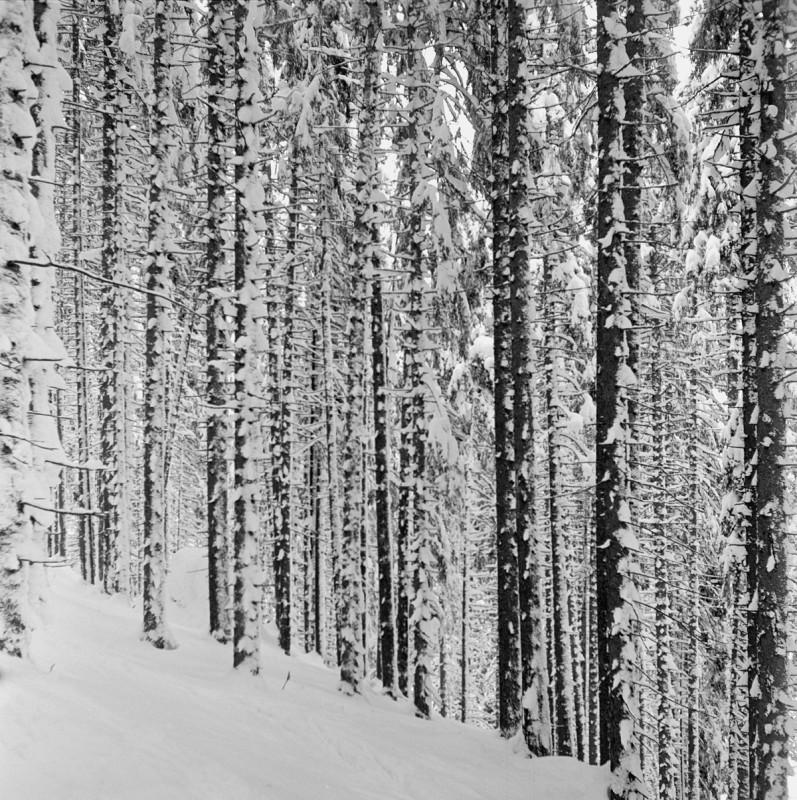 Winterlicher Zauberwald, 1952