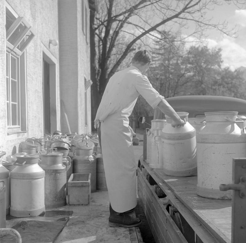 Milch aus dem Allgäu, 1952