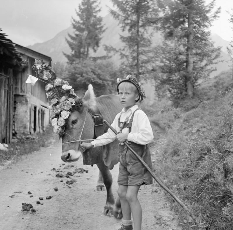 Hirtenjunge mit Kranzkuh, 1950