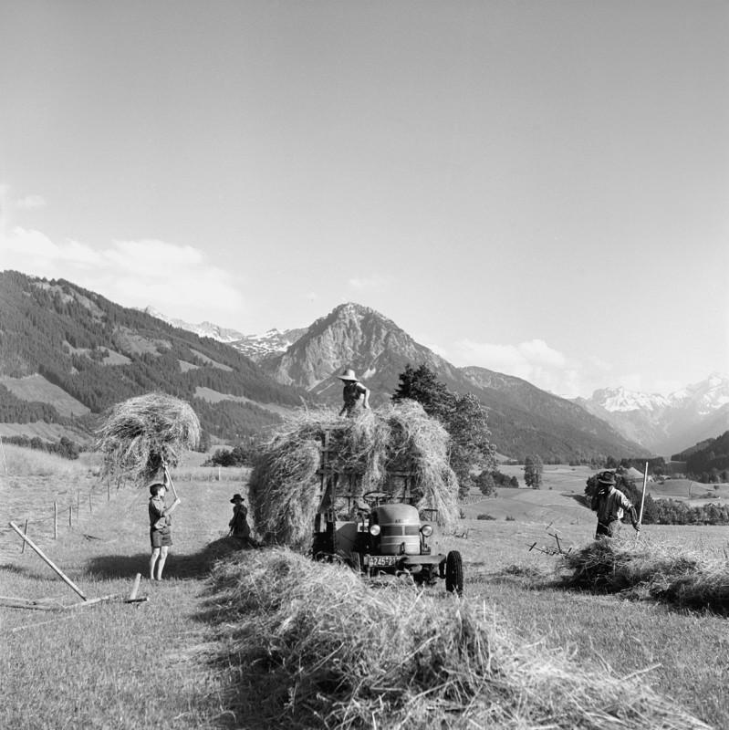 Heuernte im Allgäu, 1956