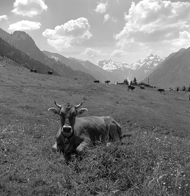 Berta liegend im Gras, 1940