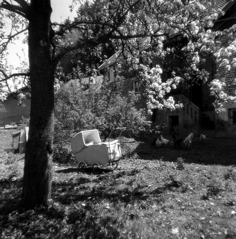 Nostalgie unter blühendem Baum, 1949